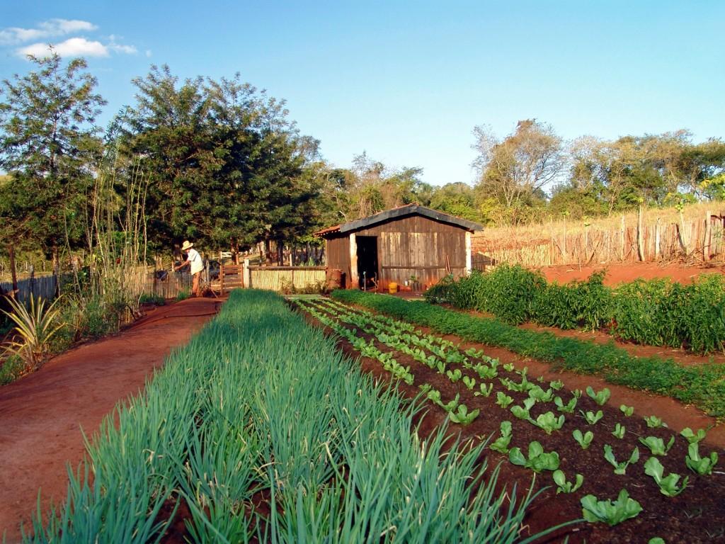 Horta em pequena propriedade rural em Avaré (SP). Créditos: José Reynaldo da Fonseca/ Wikimedia Commons